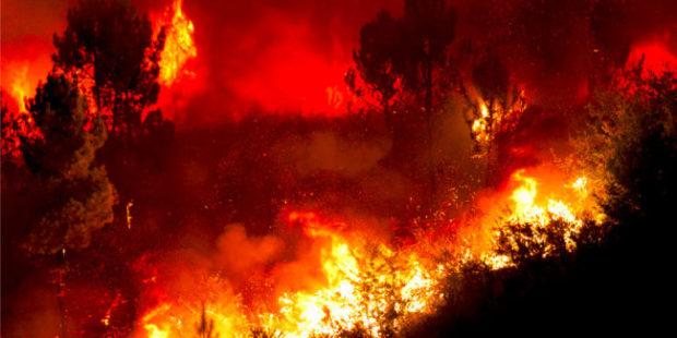 В Сочи после лесных пожаров возбудили уголовное дело