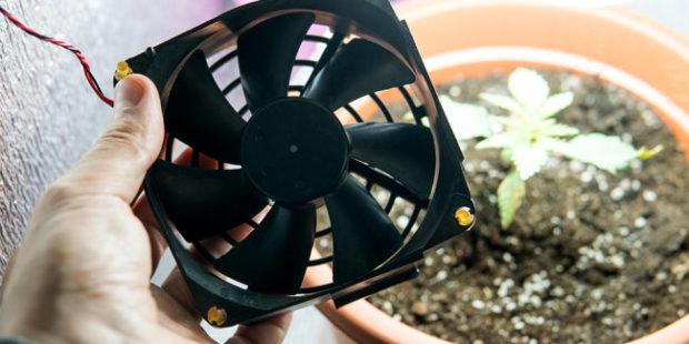 Видео: Красноярец устроил теплицу для конопли в съемной квартире