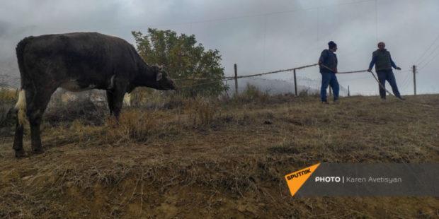 В Мартакерте опровергли данные об угоне скота и стрельбе в армянского фермера