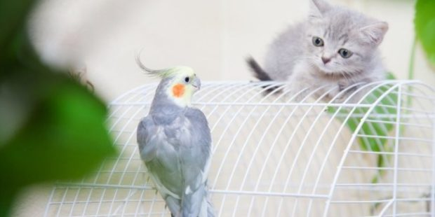 Петербуржцы через суд потребовали выселить из квартиры кошку и попугая