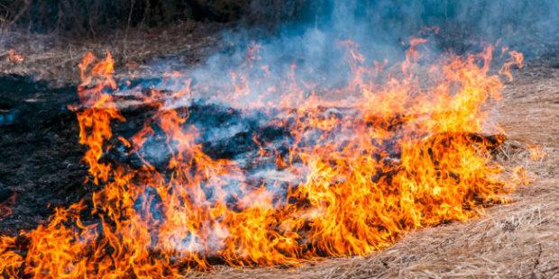 От белгородца потребовали свыше 17 млн за сожженную траву