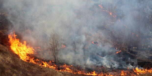 Лесные пожары угрожают 8 тысячам населенных пунктов в России