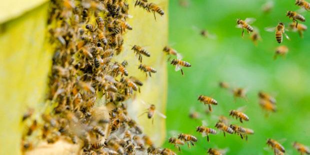 На Дону пограничники не пропустили на Украину два миллиона пчел
