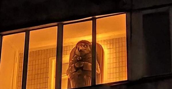 На одном из балконов в Киеве заметили странный саркофаг