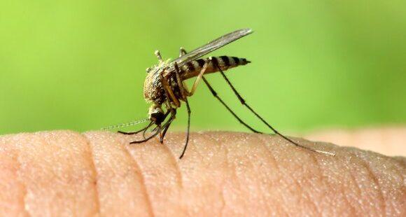 Первую волну комаров прогнозируют в Ивановской области