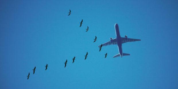 На Урале пассажирский самолет прервал полет из-за столкновения с птицей