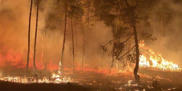 В Тюменской области ликвидировали самый крупный лесной пожар