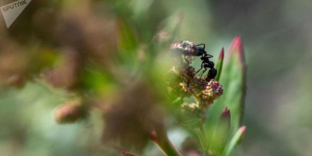 Полезные насекомые, как и ядохимикаты, освободят от налогов