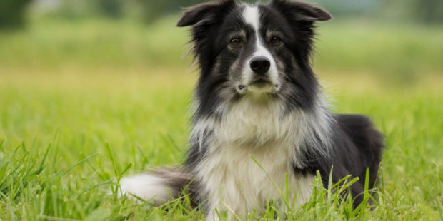 Выявлен еще один коронавирус: на этот раз ученые подозревают в распространении собак