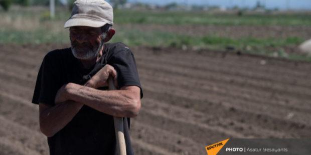 Зачем мы работаем? Иранская зелень выдавливает армянскую с рынка