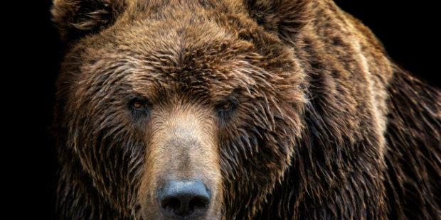 Житель Сахалина выжил в схватке с медведем