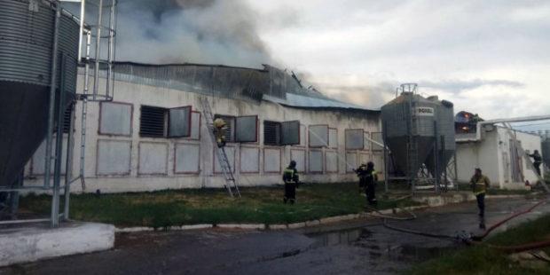 Птицефабрика под Челябинском сгорела из-за удара молнии
