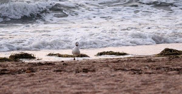 Морские блохи и медузы: на Азовском море туристы столкнулись с нашествием «местных жителей»