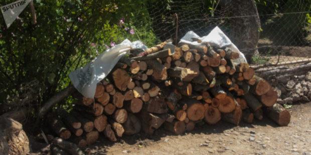 Полиция задержала 19 грузовых машин с незаконными дровами за 1,5 часа в Лори