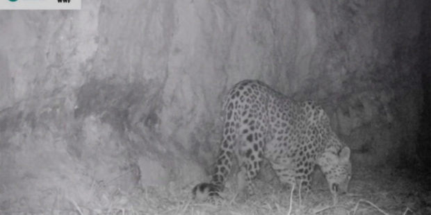 В Хосровском заповеднике гулять разрешат, но в обход леопарда и других зверей