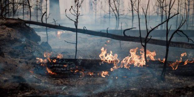 На Сахалине лесной пожар вплотную подошел к поселку