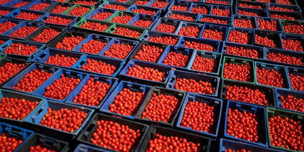 В коробке ставропольских томатов нашли записку с просьбой спасти из рабства
