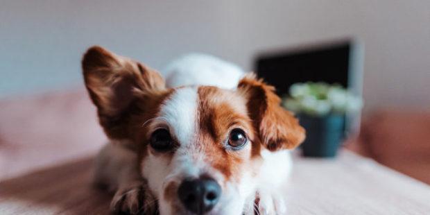 Видео: В Новосибирске спасли собаку, застрявшую за батареей