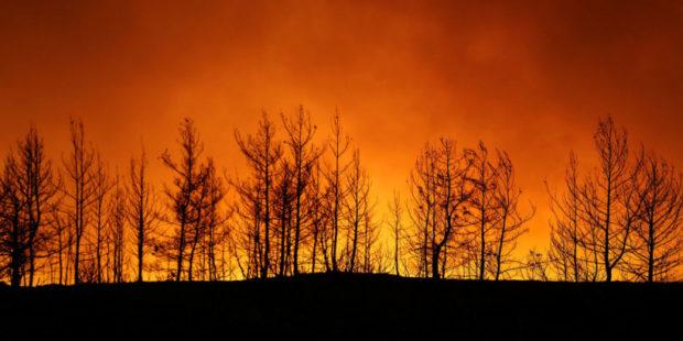 Сколько и какие районы Турции затронул пожар