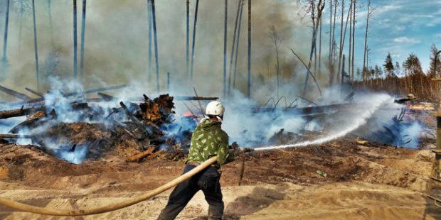 В Мордовском заповеднике выгорело 5950 гектаров леса