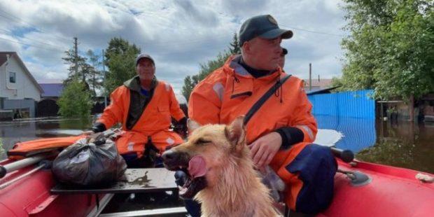Белогорск пережил пик наводнения