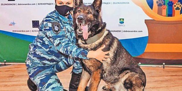 """Полицейский пес получил международную награду """"Собачья верность"""""""