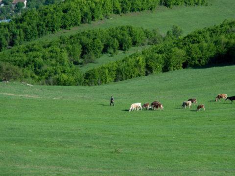Азербайджанские военные угнали скот вблизи армянского села в Вайоц Дзоре