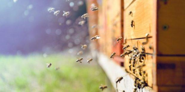 В Красноярском крае погибли 20 миллионов пчел