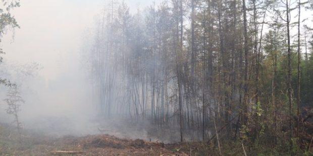 Трутнев поручил обеспечить безопасность людей, живущих возле лесов в Якутии