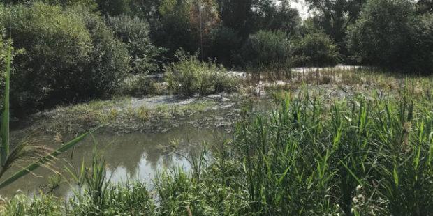 В Челябинске нашли причину выброса сероводорода