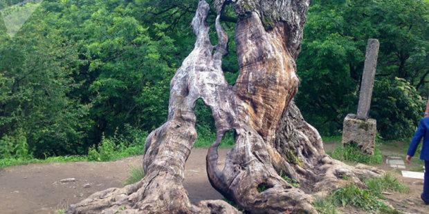 Видео. Мужчина случайно сломал дерево желаний в Агарцине