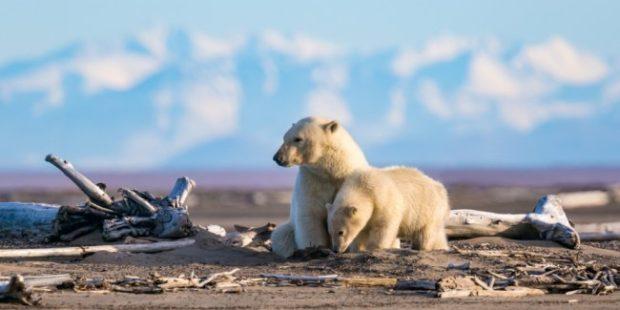 """На Ямале оленеводам выдали """"боевые"""" наборы для отпугивания медведей"""