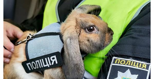 Украинский кролик-полицейский стал звездой соцсетей