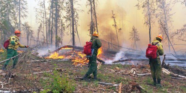Мэр Тольятти предложил полмиллиона рублей за сведения о поджигателях леса