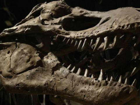"""В пустыне Кызылкум палеонтологи нашли """"царя динозавров"""""""