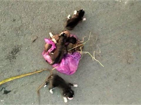 В Тюменской области из-под мусорного пресса спасли щенков