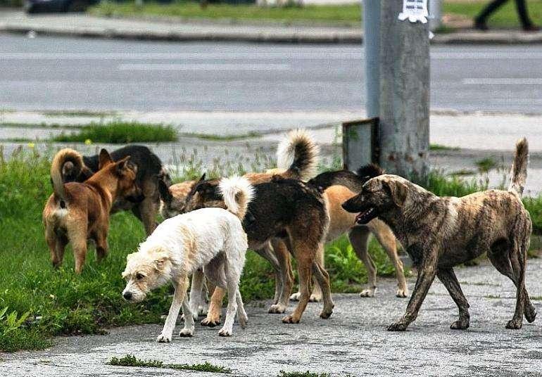 Отлов бродячих собак продолжился