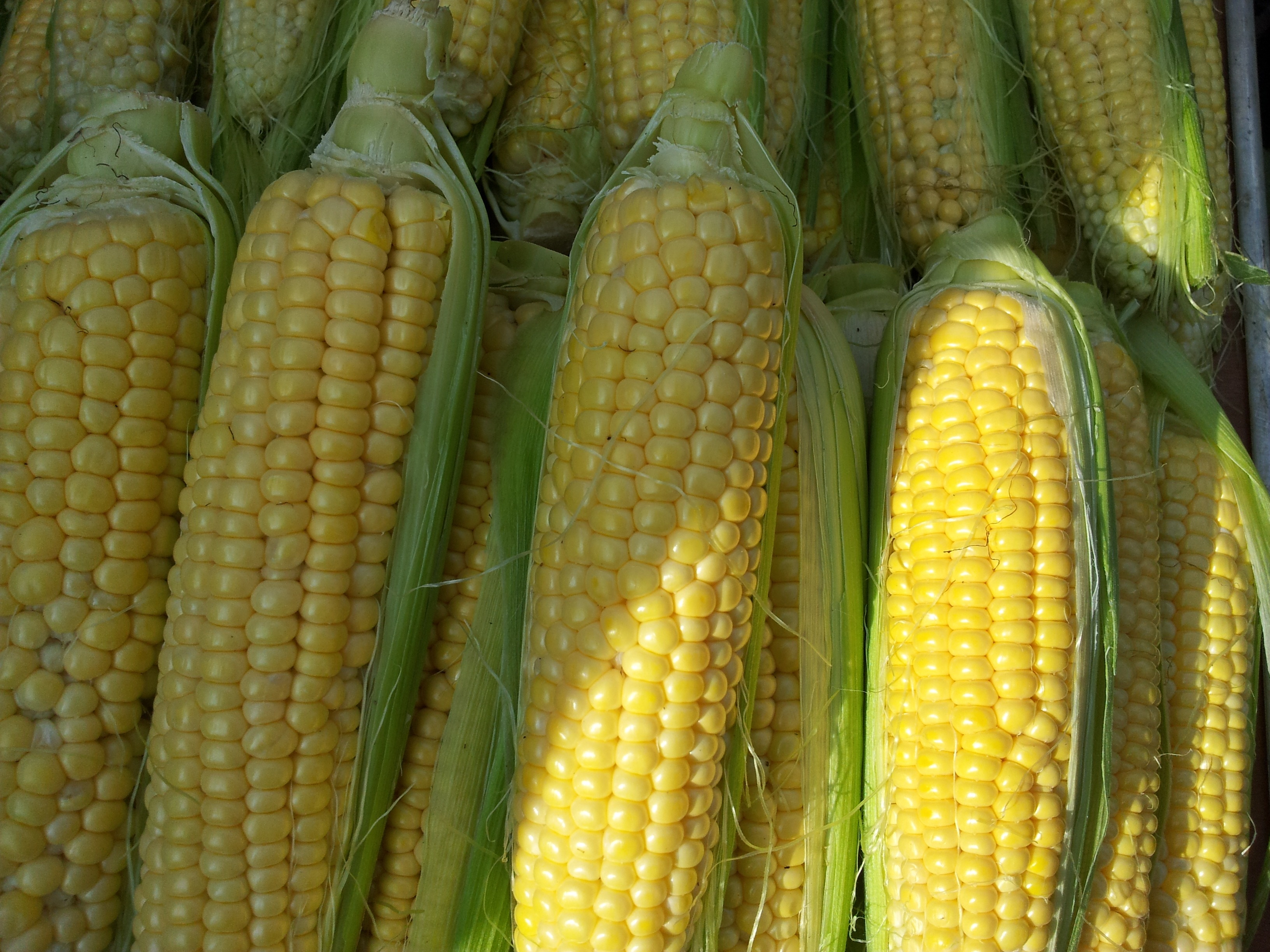 Житель Киреевского района украл больше 400 килограммов кукурузы