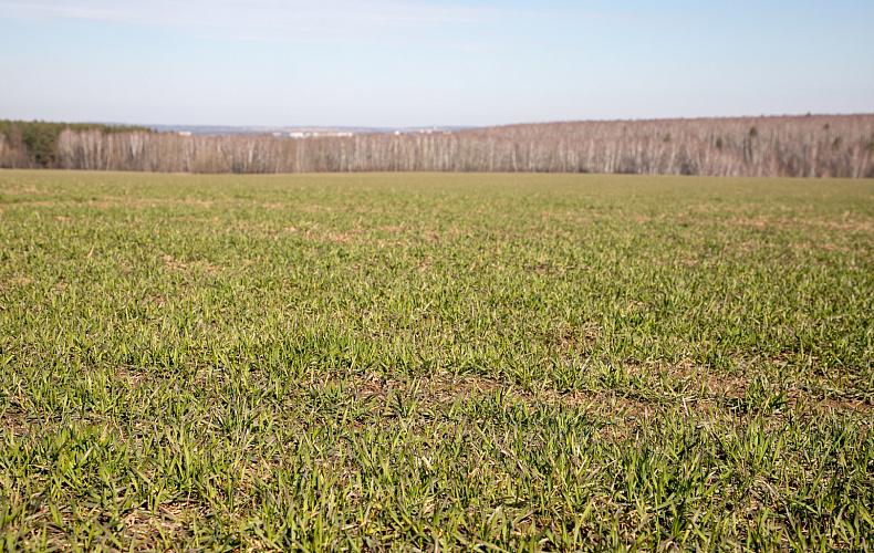 В Тульской области утвержден список земельных участков для многодетных семей