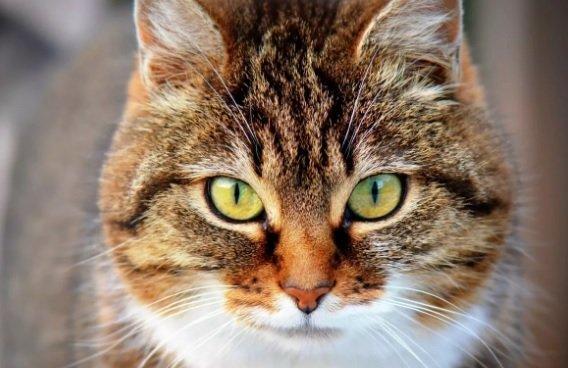 Почти 400 домашних животных в Тульской области стали участниками месячника льготной стерилизации