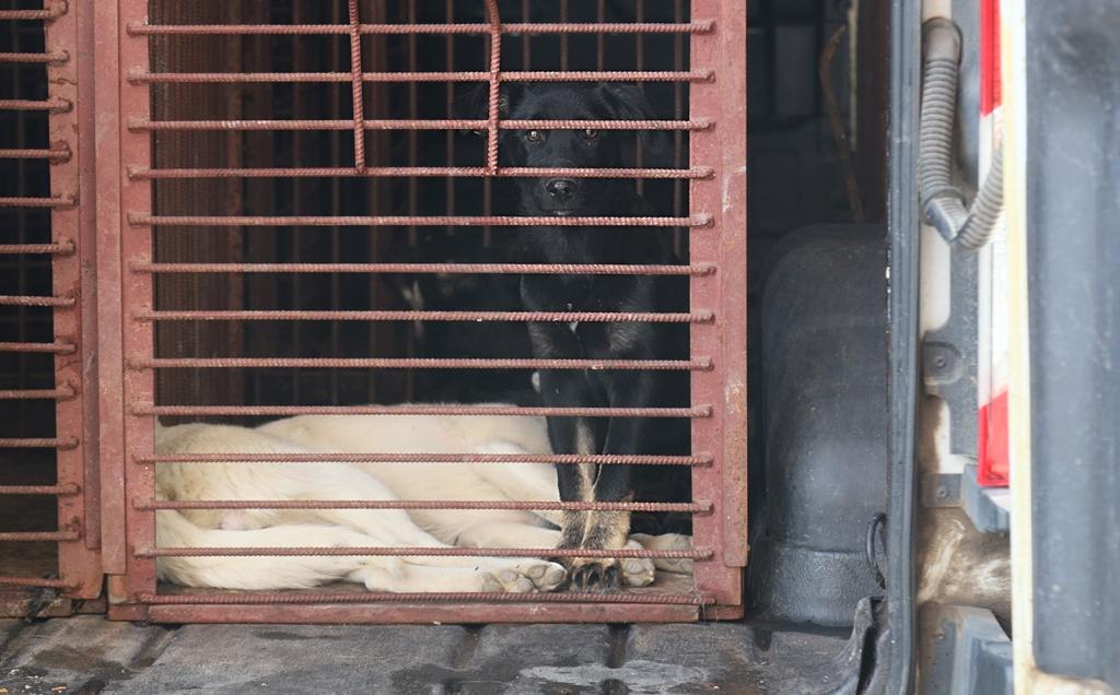 На отлов бездомных собак в Туле потратят почти 3 миллиона рублей