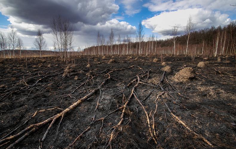 В пяти районах Тульской области установлен 4 класс пожароопасности
