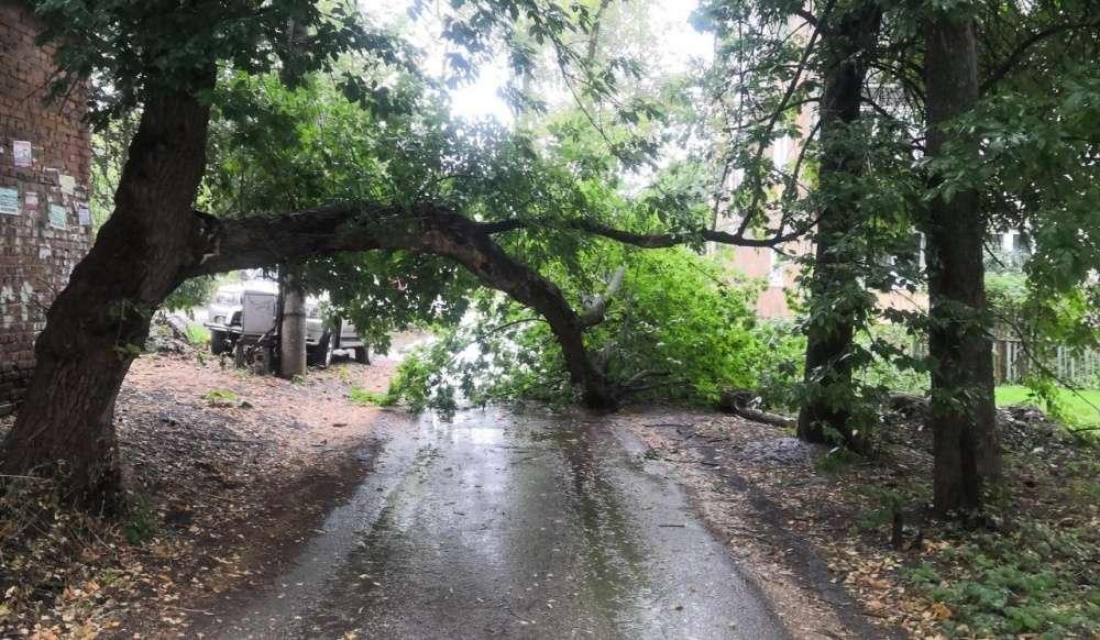 Непогода в Щекино: упавшие деревья и радуга