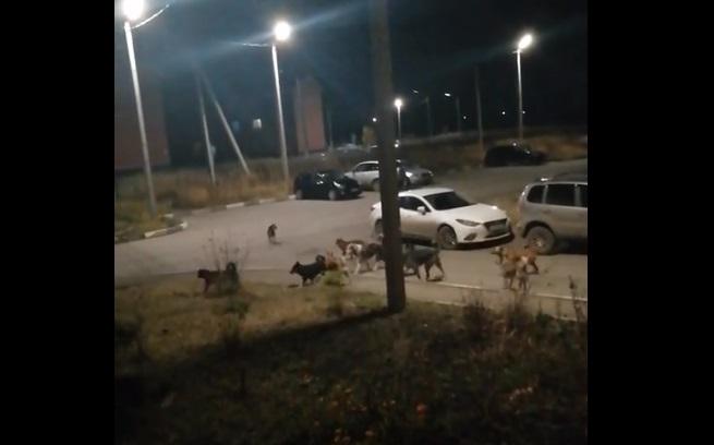 Жителей Кимовска держит в страхе стая бродячих собак