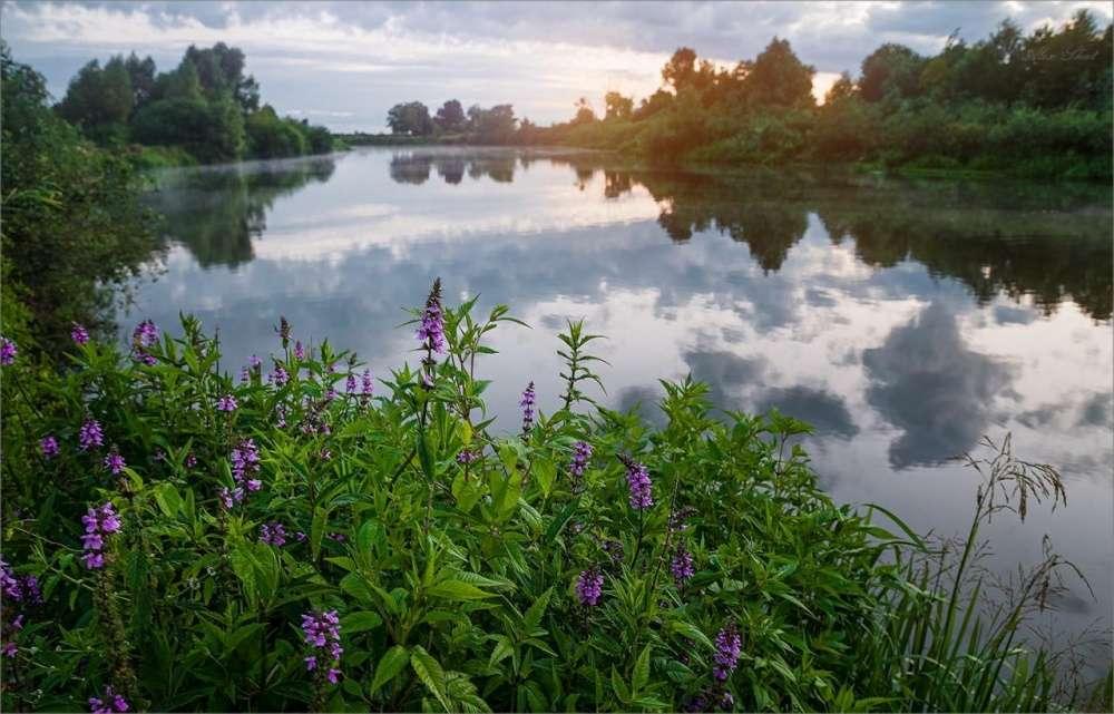 Погода в Щекино 19 августа 2020 года