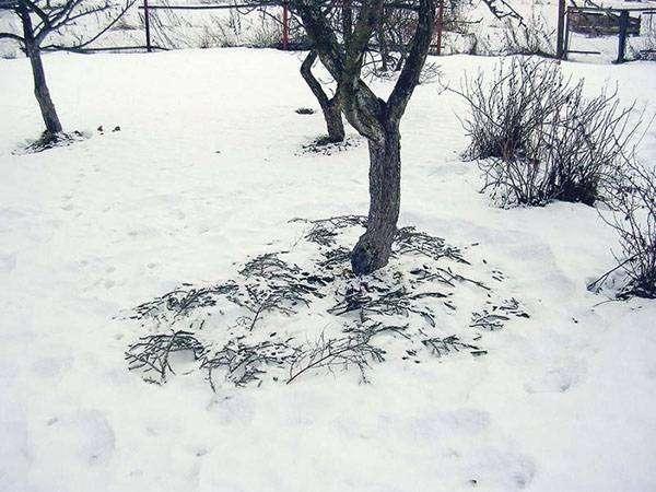 Лучшая защита – снежное одеяло