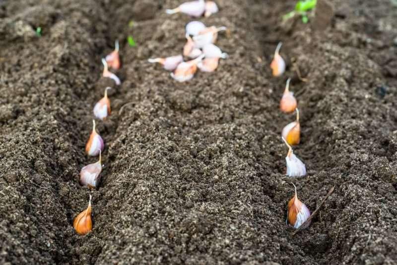 Щекинцы завершают дачный сезон