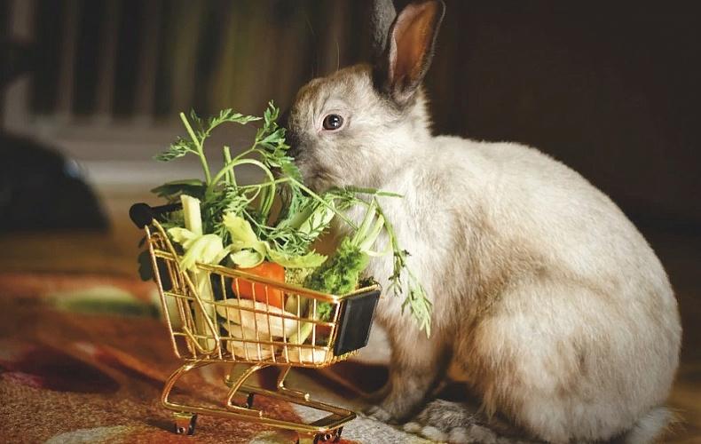 В Тульской области могут появиться плантации голубики и кролиководческая ферма