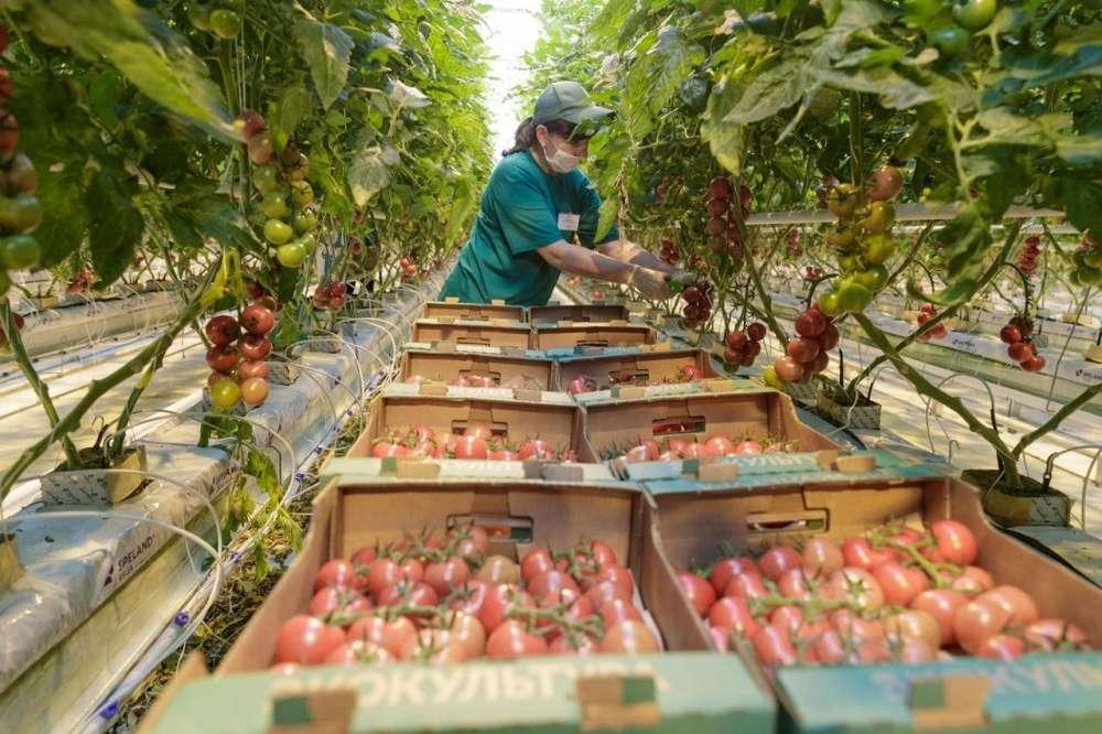 В 2020 году в сельском хозяйстве региона отмечен рост по многим направлениям