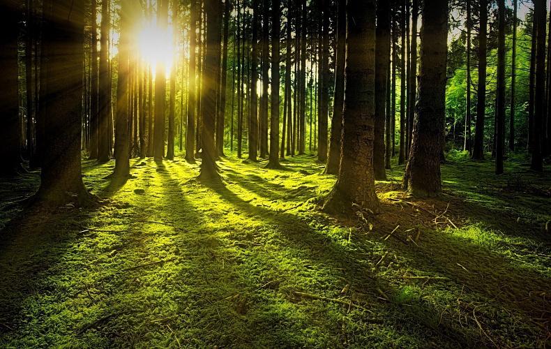 Туляки смогут без торгов получить в аренду лесные участки
